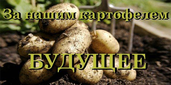 Семена картофеля в Воронеже, Воронежской области