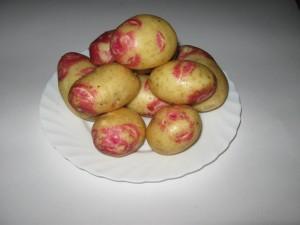 Семена среднепозднего картофеля Воронеж, Воронежская область